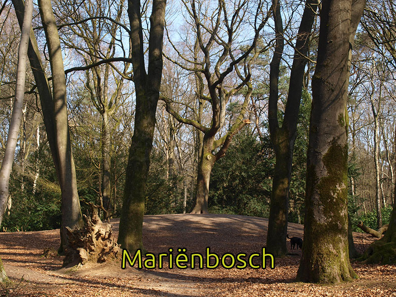 Mariënbosch
